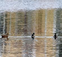Duck Trio by Lindy Long