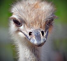 Ostrich by Savannah Gibbs