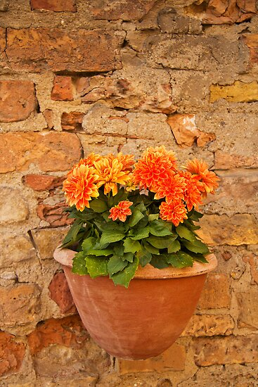 Chrysanthemums and terracotta  by vivsworld