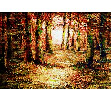 Heart of the forest'... Photographic Print