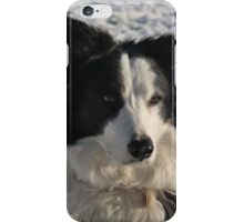 Border Collie - Murphy iPhone Case/Skin