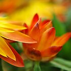 Orange Flower in the Evening Sun by William Martin