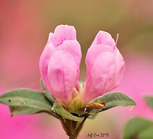Azalea Buds by Jeff Ore
