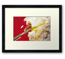 Yellow Daffodil In Water 1 Framed Print