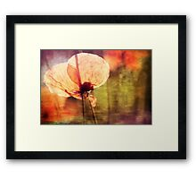 Poppy with Bumble Bee Framed Print
