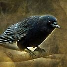 Crow by Bine