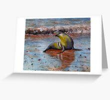 Seal on Galapagos  Greeting Card