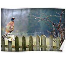 A Pheasants Tail.............. Poster