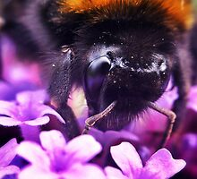 Busy Bee by Paul Duncan