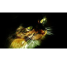 Lily Mae Princess of Cats Photographic Print