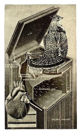 Bird Song. by - nawroski -