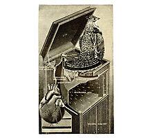 Bird Song. Photographic Print