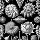 Sea Shells and Fossils in Black and White (Thalamophora) by RedPine