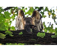 Red Tailed Hawk with Black Squirrel Photographic Print