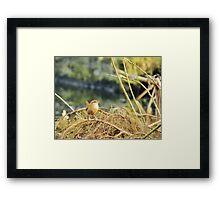 Little Jenny Wren! Framed Print