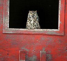 Red Barn Espionage by EchoNorth