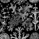 Lichens in Black and White by Ernst Haeckel by RedPine