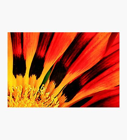 Flower on Fire Photographic Print