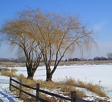 Two Trees in Winter by jkartlife