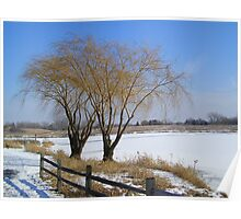 Two Trees in Winter Poster