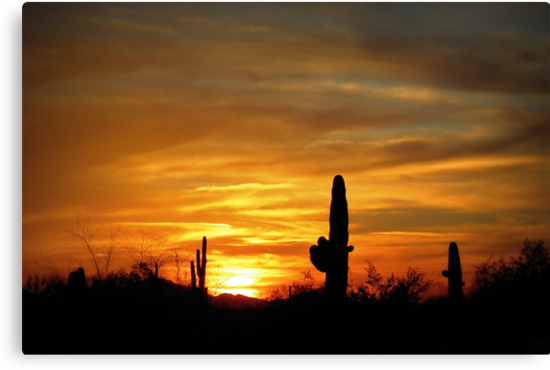 Sunset in the Sonoran Desert by Kimberly Chadwick