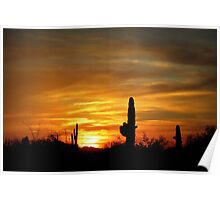 Sunset in the Sonoran Desert Poster