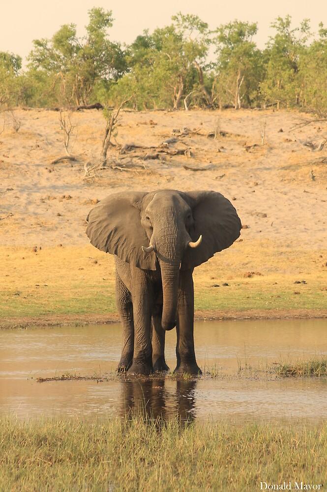 River Elephant by Donald  Mavor
