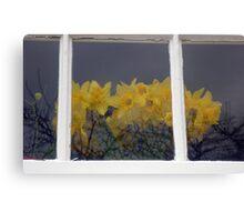 Daffodils Behind The Window Canvas Print