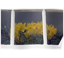 Daffodils Behind The Window Poster