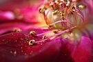 Heart of Gold by yolanda