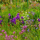 wild flower garden by supergold