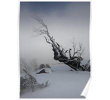 Snowgum at Gungartan Poster