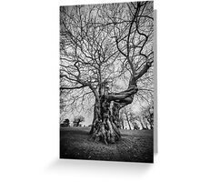 Huge Tree Greeting Card