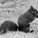 Black Squirrel in B&W by AnnDixon