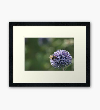 Bee on an Onion Framed Print