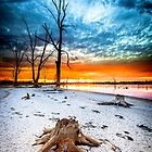 Stump at Kings Billabong by hangingpixels