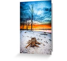 Stump at Kings Billabong Greeting Card