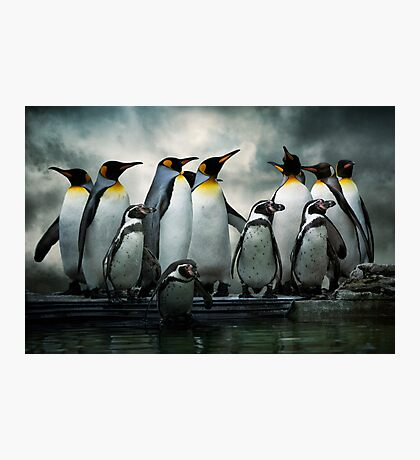 Penguins at Bourton Photographic Print