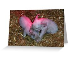 Playing Piglets Greeting Card