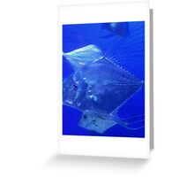 Silver Dollars Greeting Card
