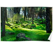 light in the dark forest Poster