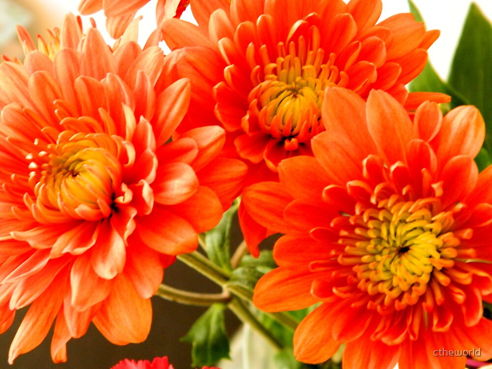 Triple Delight - Orange   ^ by ctheworld
