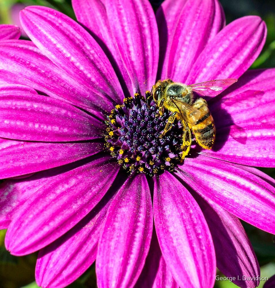 Honey Bee by George I. Davidson