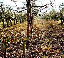 1982 orchard → by Gregoria  Gregoriou Crowe