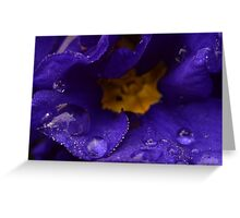 Blue primrose 1 Greeting Card
