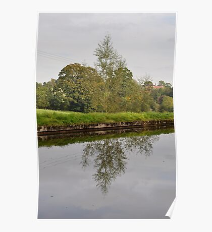 Tree Mirror Image 1  Poster