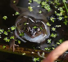 Mr Frog has an anouncement! ......(see next pic) by Rivendell7