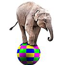 Baby elephant on a ball by Norma Cornes