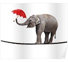 Elephant on a tightrope Poster