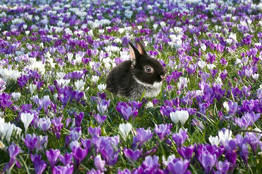 Easter Bunny in the Spring by Andrew Bret Wallis